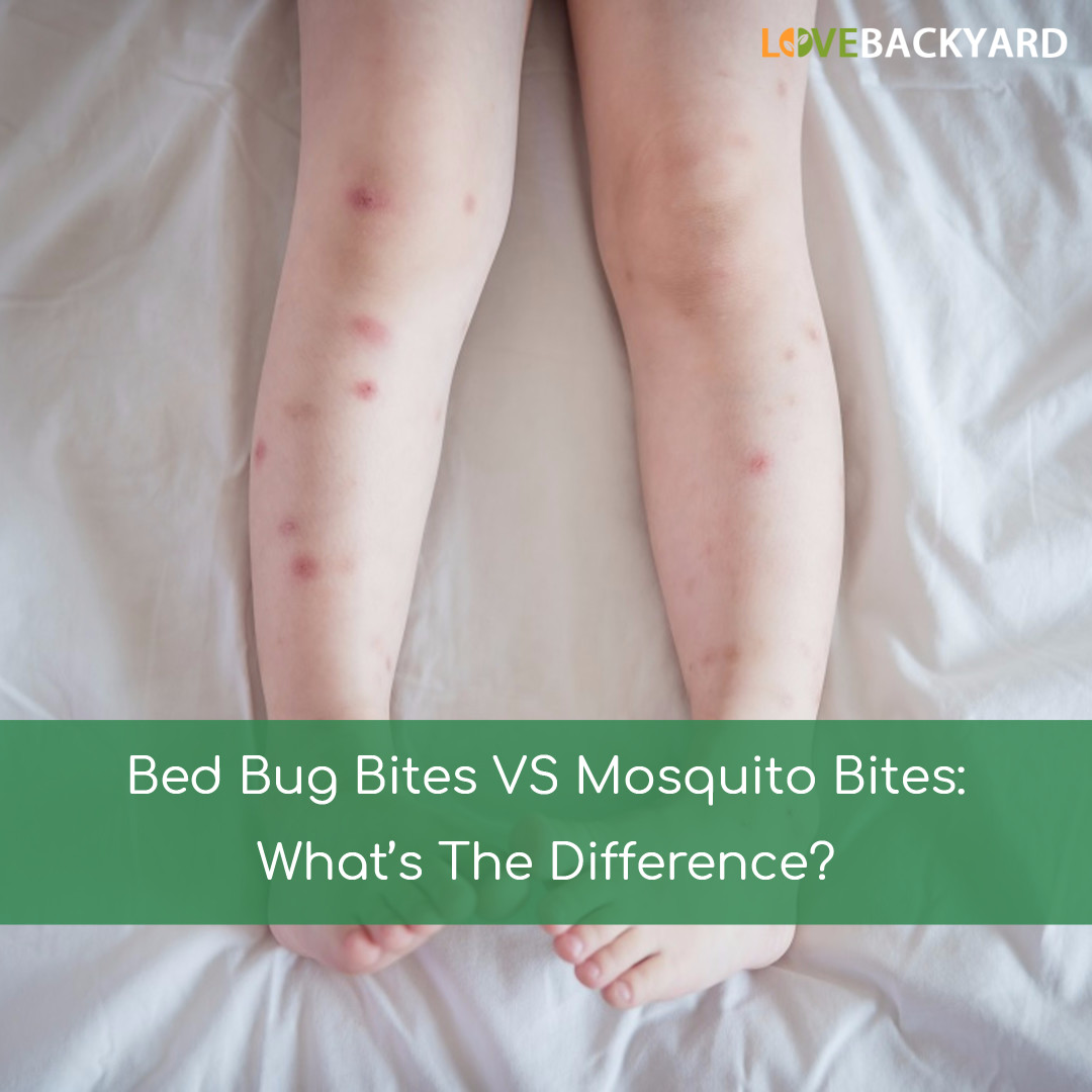 Bed Bug Bites VS Mosquito Bites: What's The Difference ...