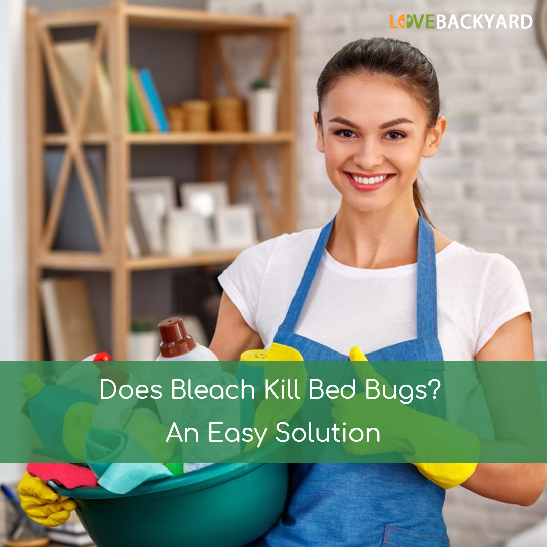Household Sprays To Kill Bed Bugs