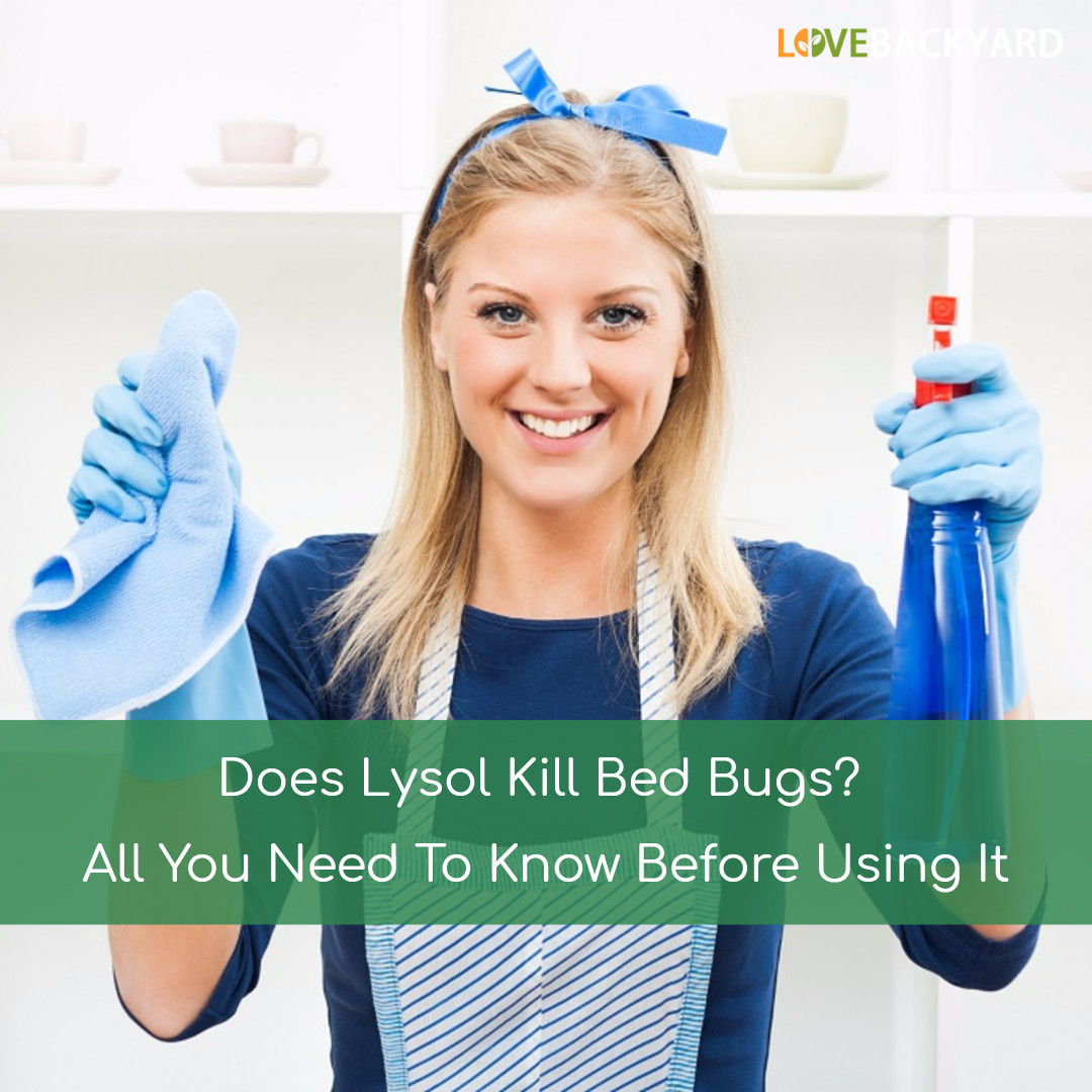 Does Lysol Kill Bed Bugs All You Need To Know Before