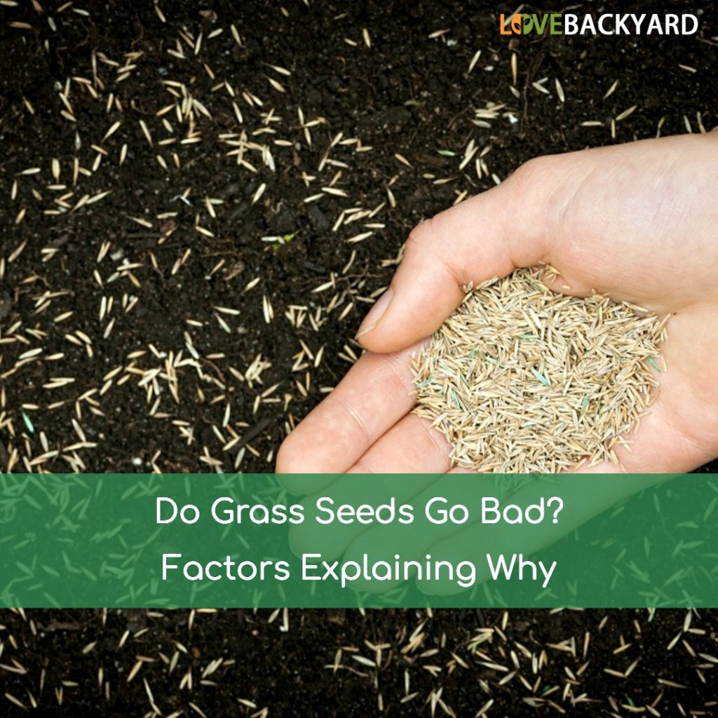 Does grass seeds go bad