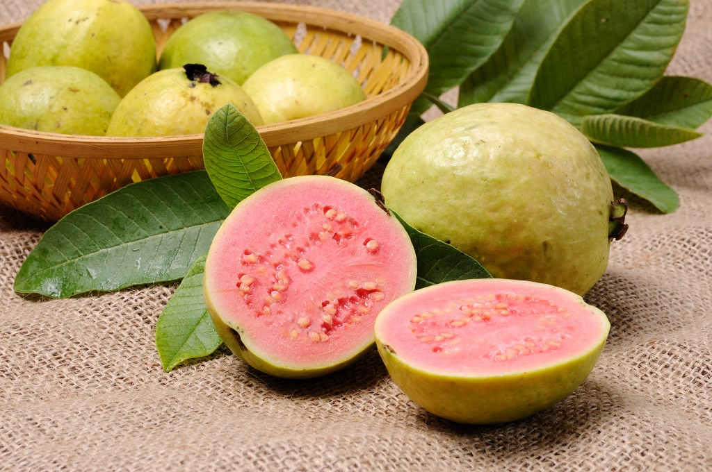 How to Grow a Guava Tree  Hunker