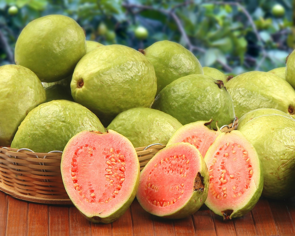 Psidium Guajava Ormonly Known As Guava Or Lemon Guava Are Tropical  Fruits That Are Cultivated And Enjoyed In Tropical And Subtropical Regions