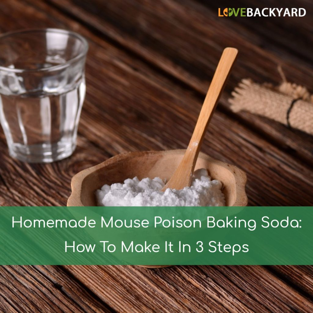Homemade Mouse Poison Baking Soda