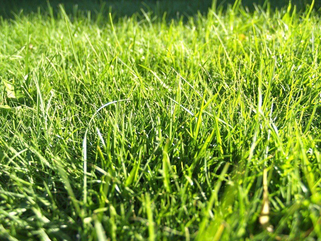 sunlight on grass