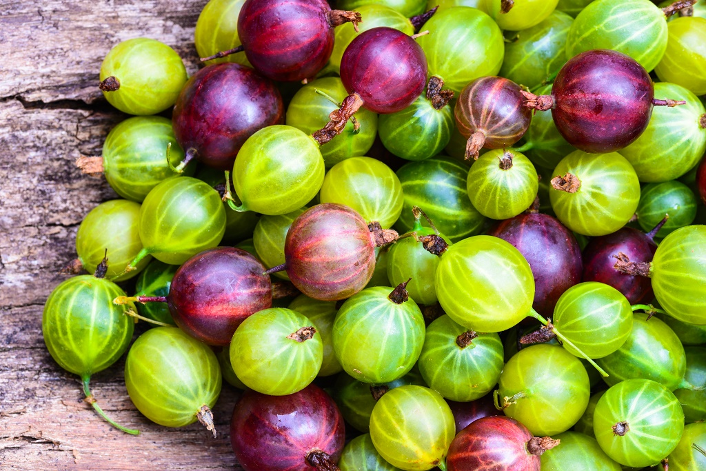 eauropean gooseberries
