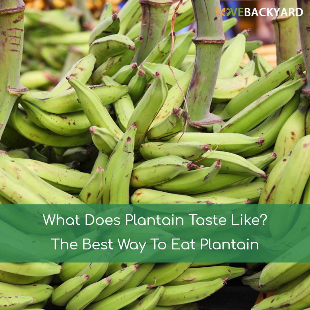 What Does Plantain Taste Like? The Best Way To Eat