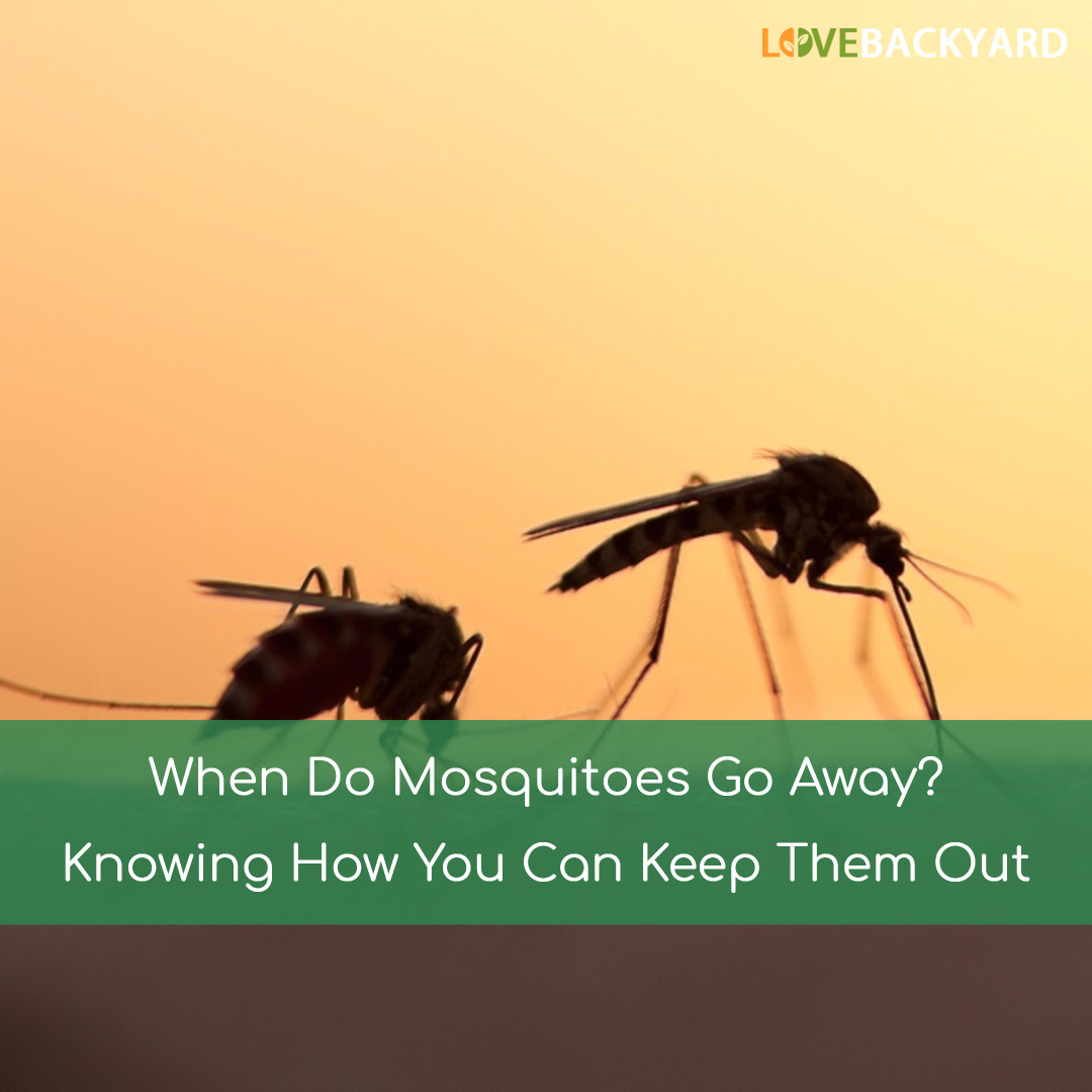 when do mosquitoes go away jul 2017 knowing how you can keep them