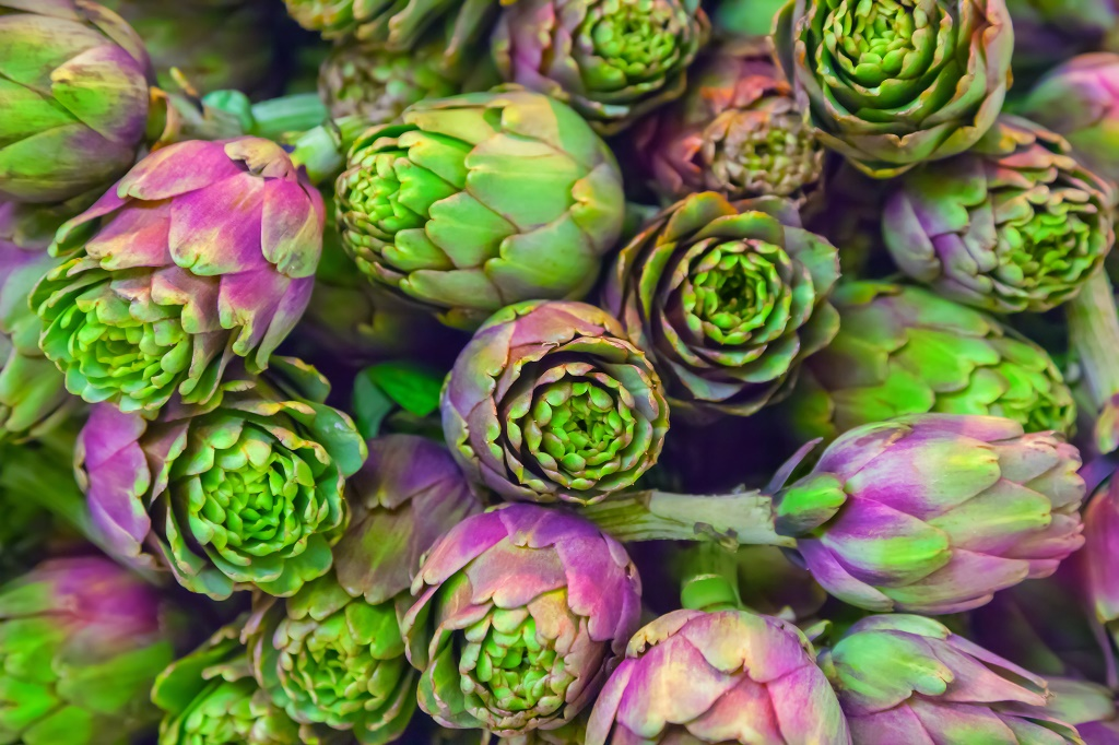 artichoke background