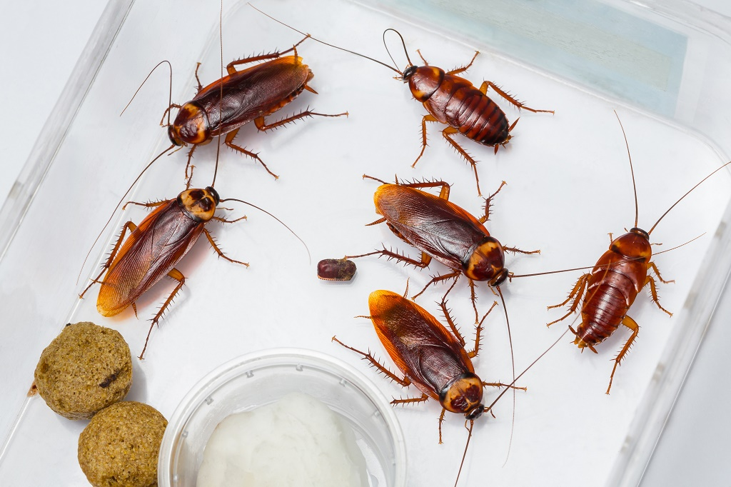 cockroaches in box