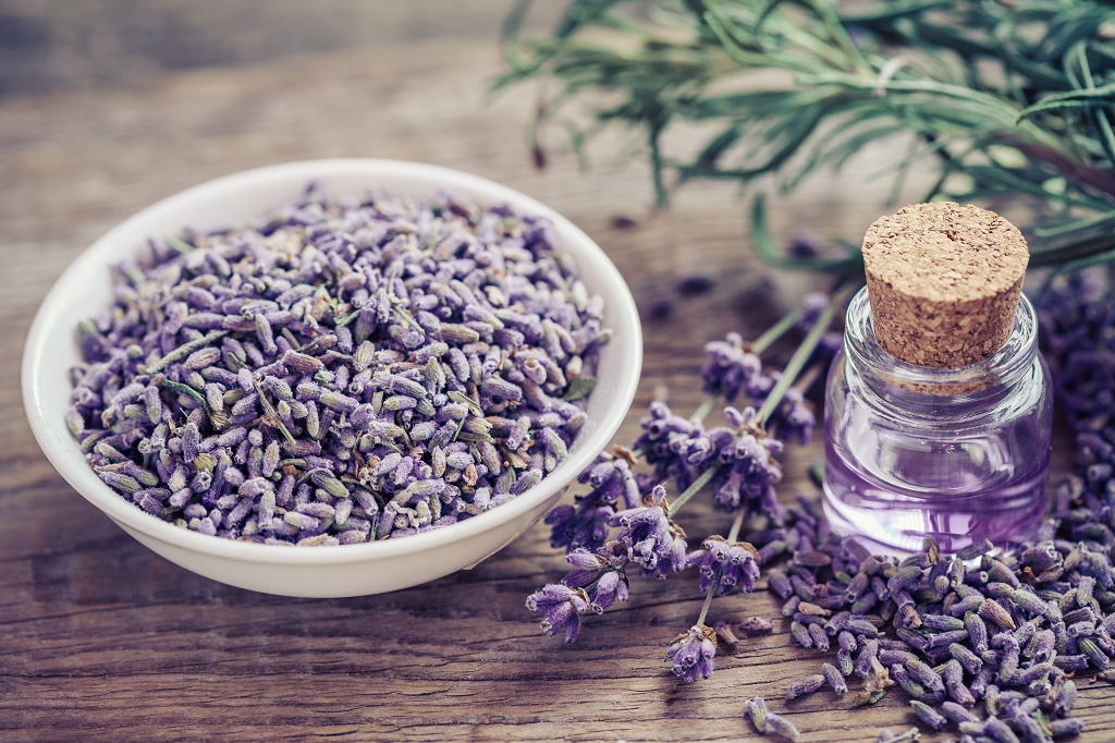 Bugs Bed Bugs And Lavender