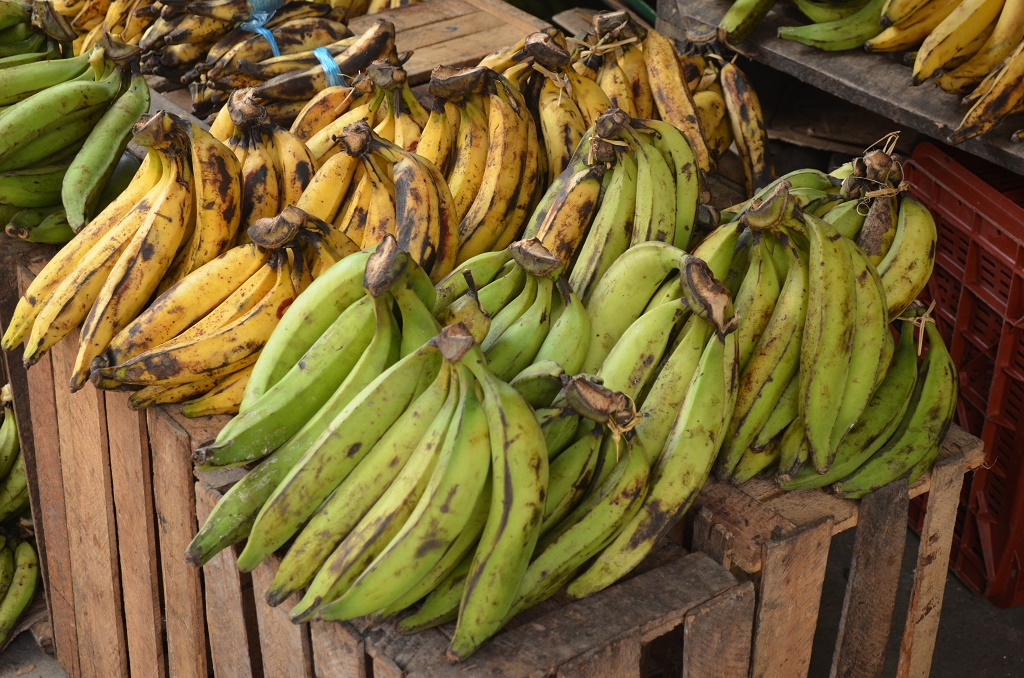 Image result for plantain bananas