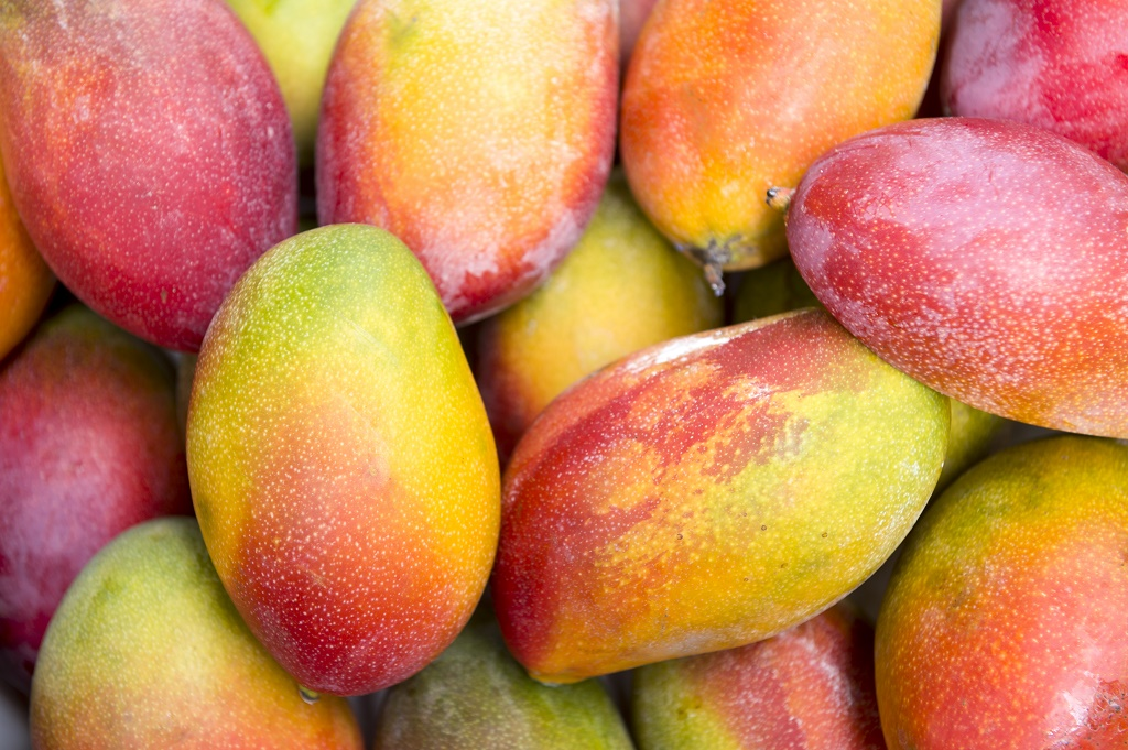 tommy atkins mangoes