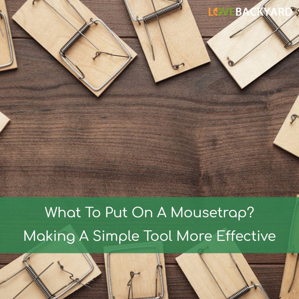 what to put on a mousetrap
