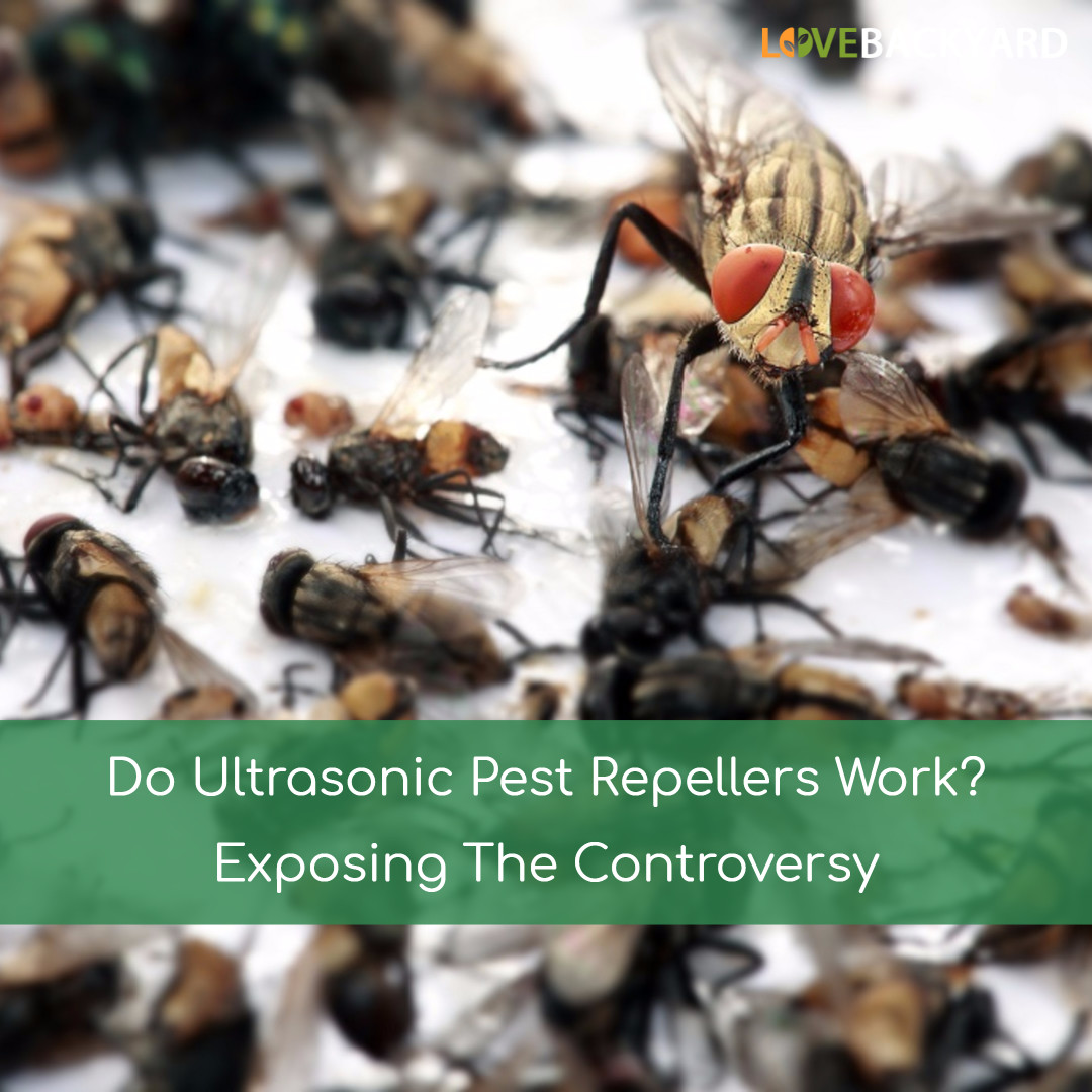Do Ultrasonic Pest Repellers Work? (Aug  2019) Exposing The