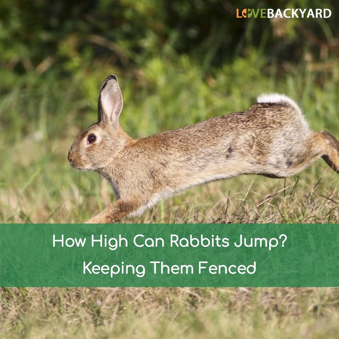 How High Can Rabbits Jump Mar 2019 Keeping Them Fenced