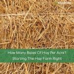 How Many Bales Of Hay Per Acre