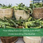 How Many Ears Of Corn In A Bushel