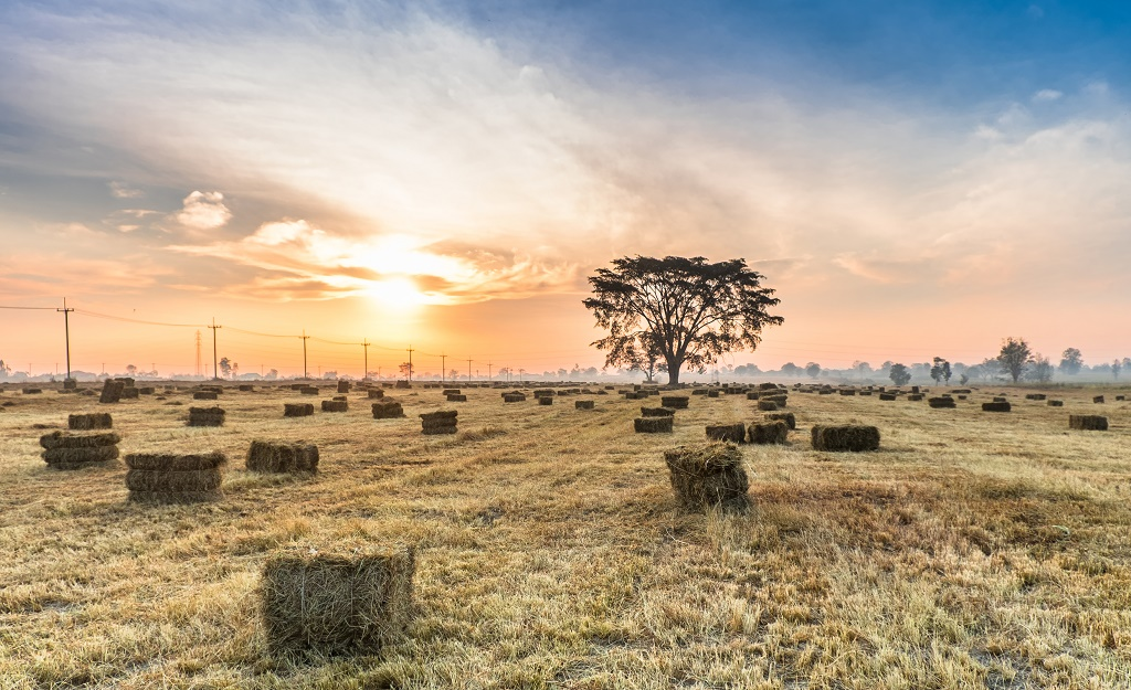hay bales in sunset