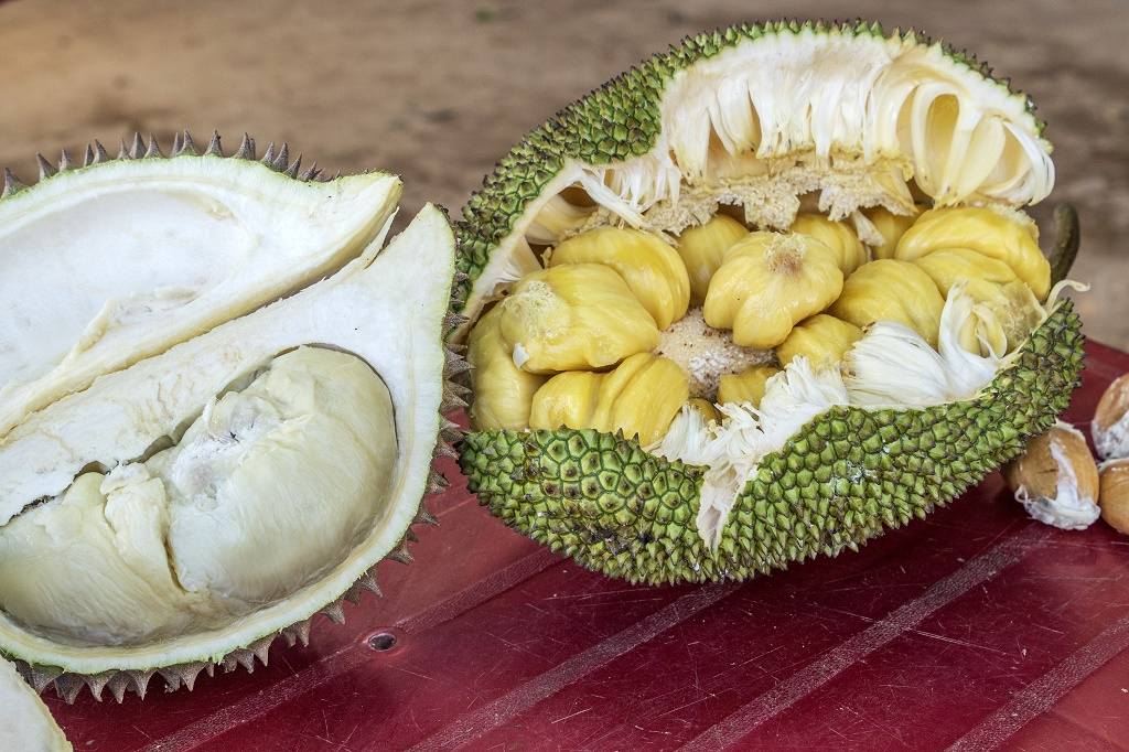 Jackfruit VS Durian: How Can You Tell One From The Other ... Jackfruit Vs Durian