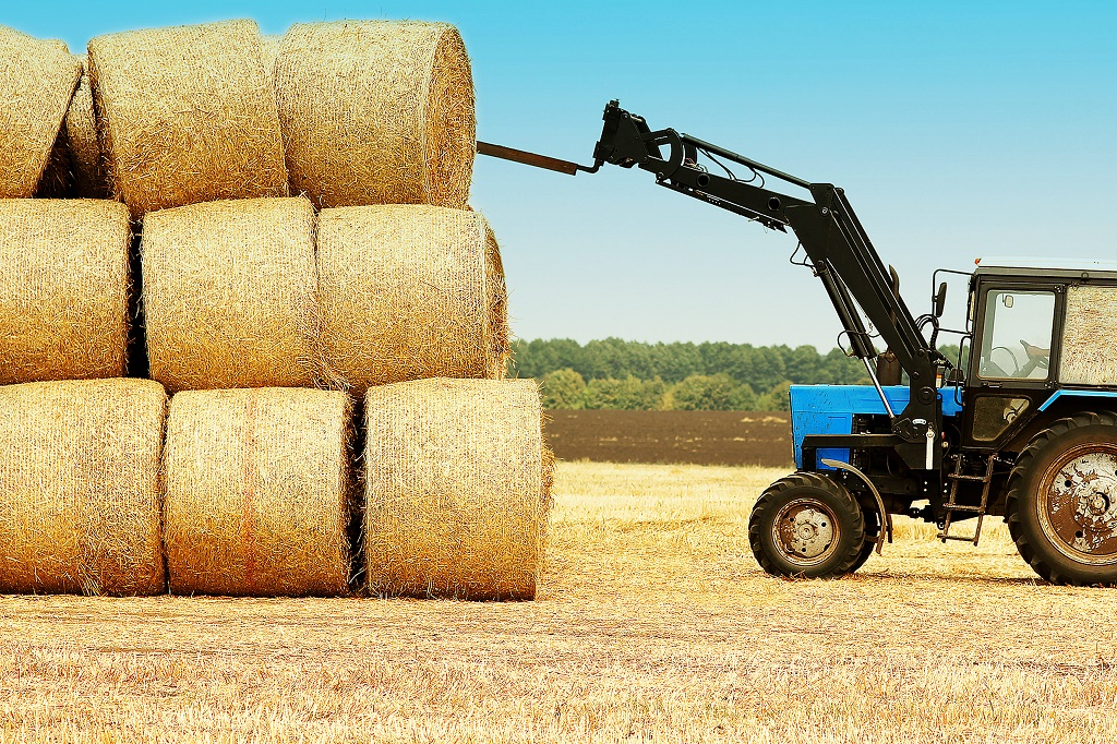How Much Does A Bale Of Hay Weigh? Giving The Right Amount