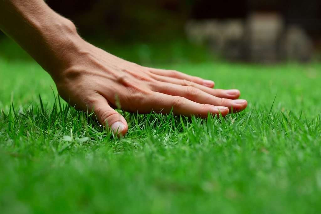 touch young grass