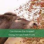 Can Horses Eat Grapes