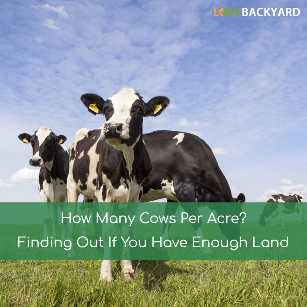 How Many Cows Per Acre