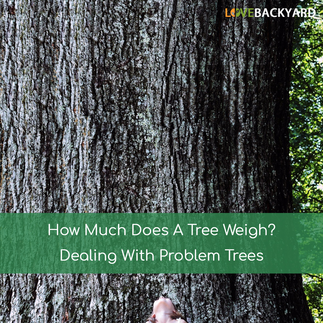 How Much Does A Tree Weigh - Copy