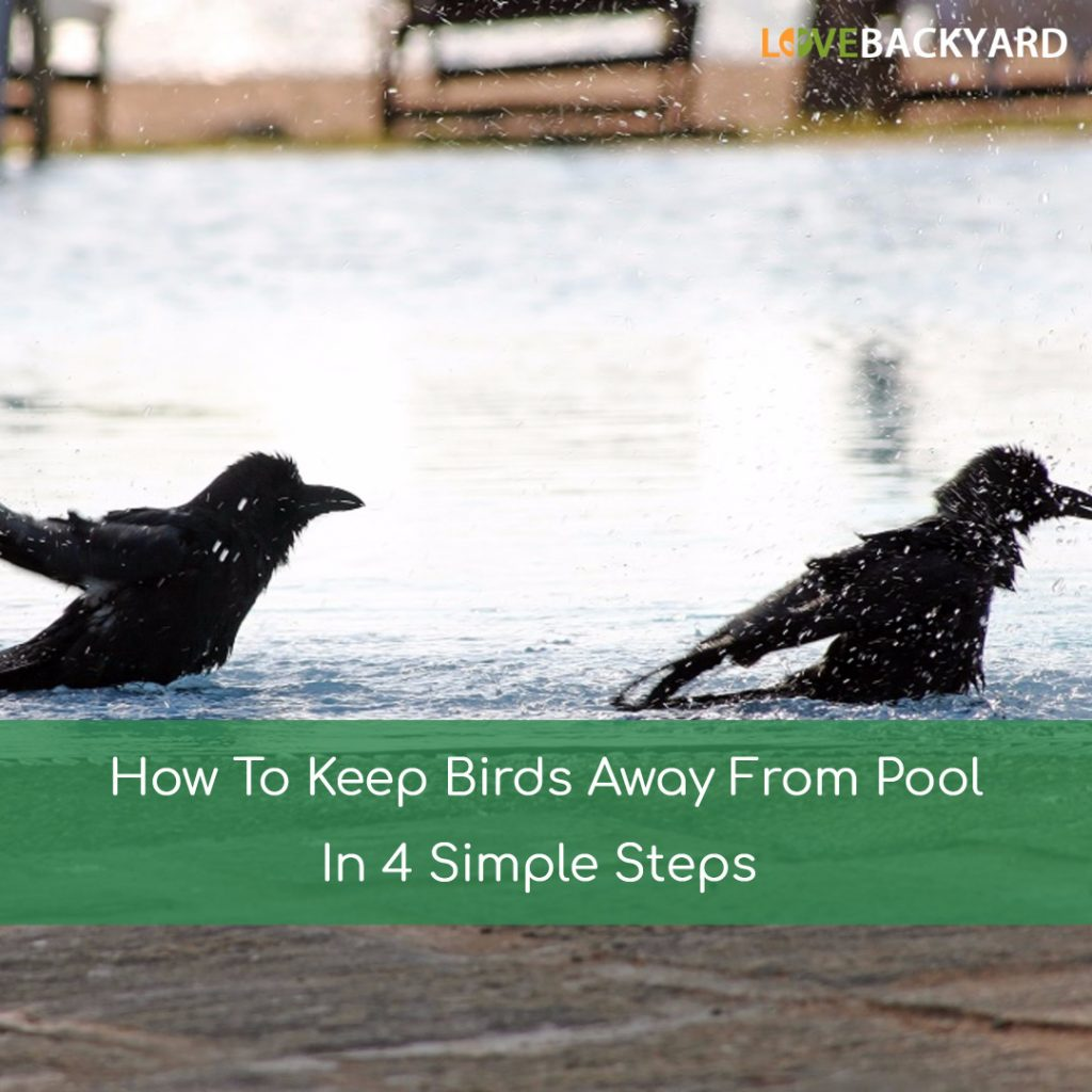 How To Keep Birds Away From Pool
