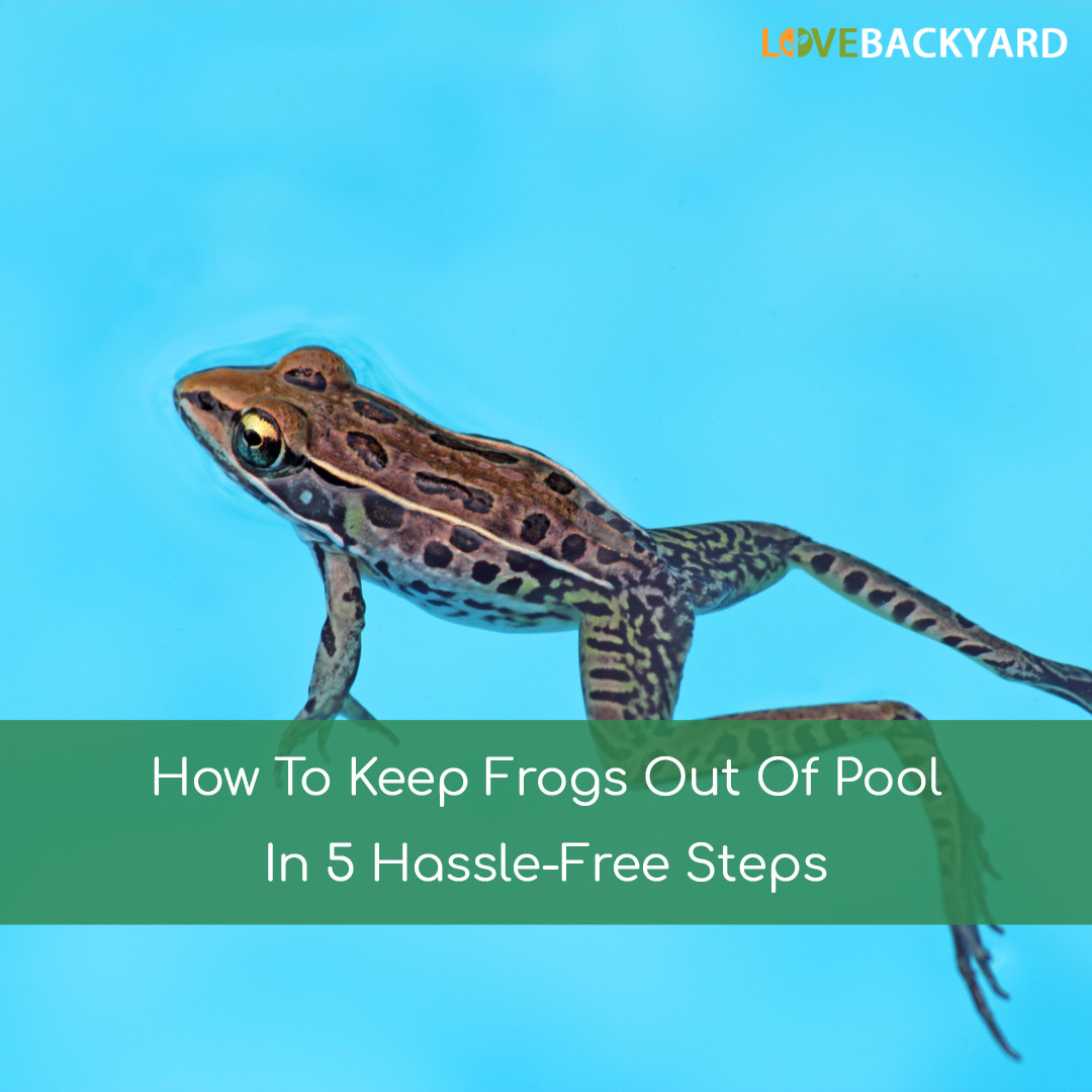 How To Get Rid Of Frogs In Backyard how to keep frogs out of pool in 5 hassle-free steps (nov. 2018)