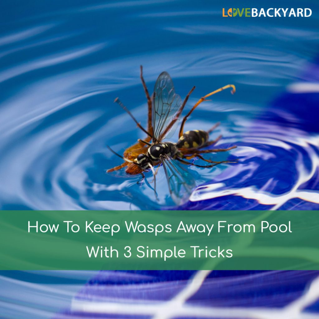 How To Keep Wasps Away From Pool