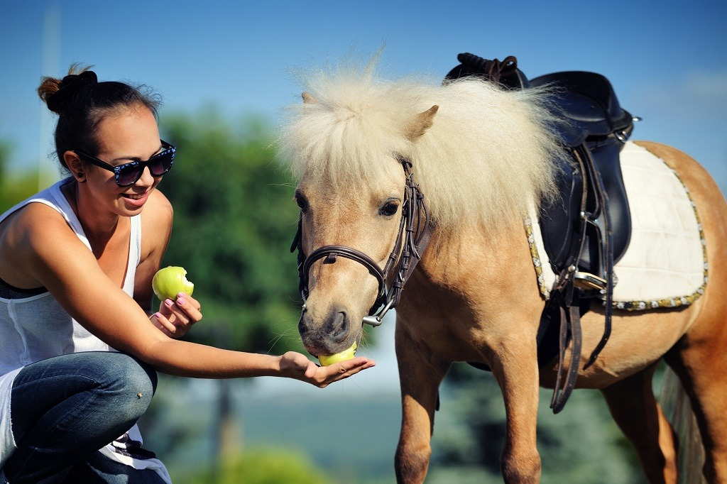 feeding horse with an apple