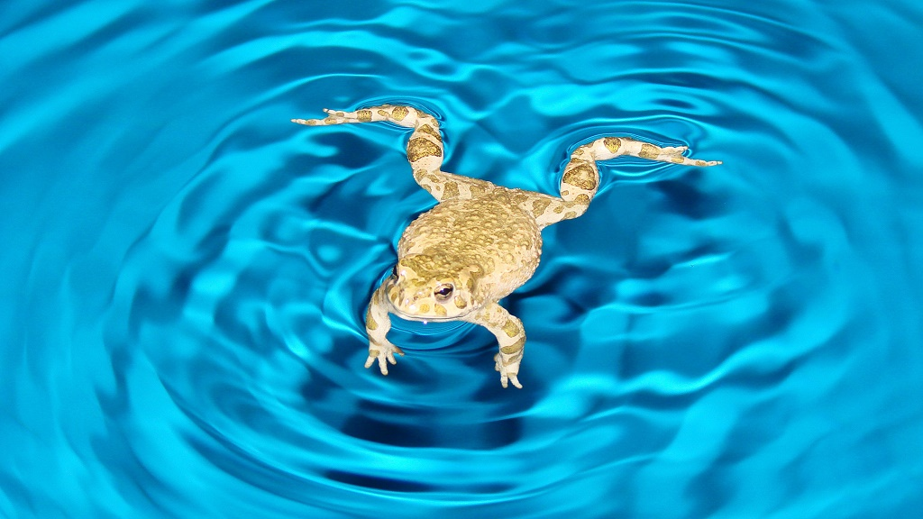 How To Keep Frogs Out Of Pool In 5 Hassle Free Steps Jul 2018