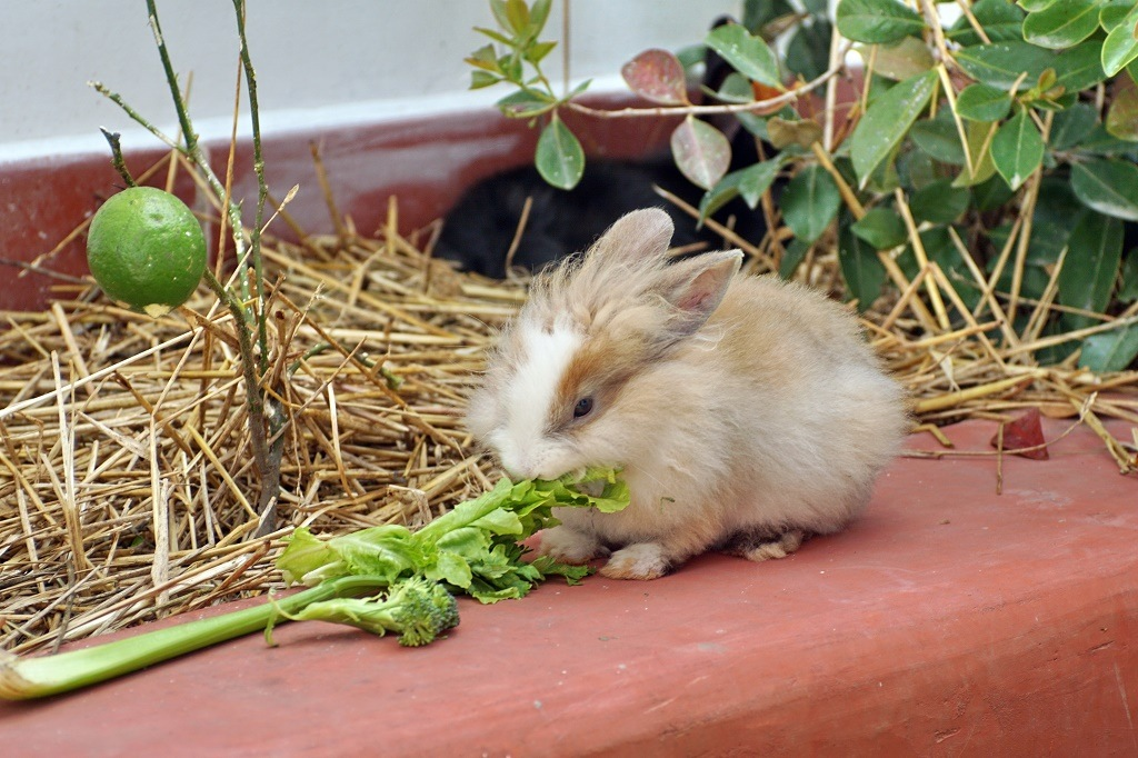 a rabbit eating celery
