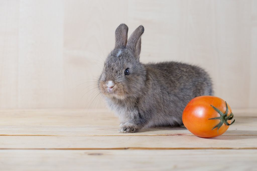 a rabbit with a tomato