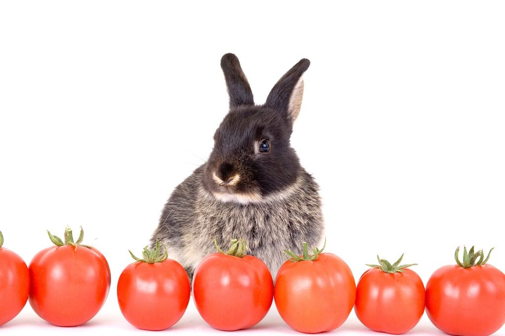 a rabbit with tomatoes