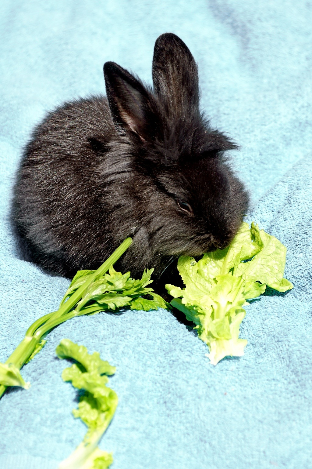 rabbit eating celery