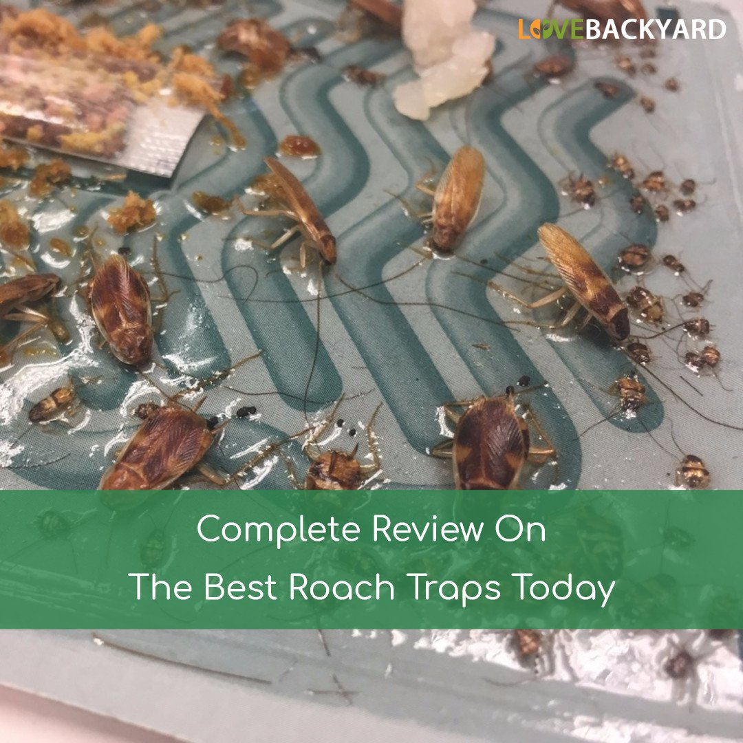 Destruction of cockroaches by fog: reviews