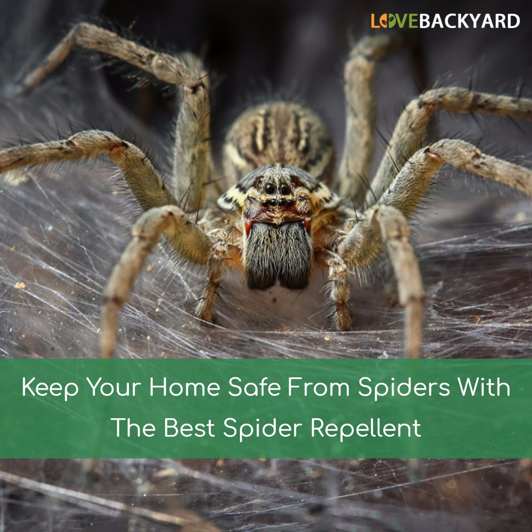 the 5 best spider repellents reviews ratings may 2018