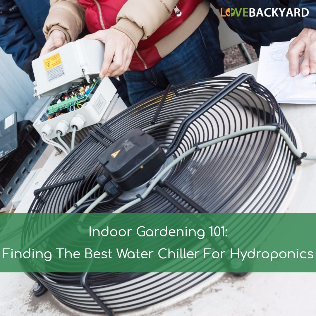 The 5 Best Water Chillers For Hydroponics + Reviews