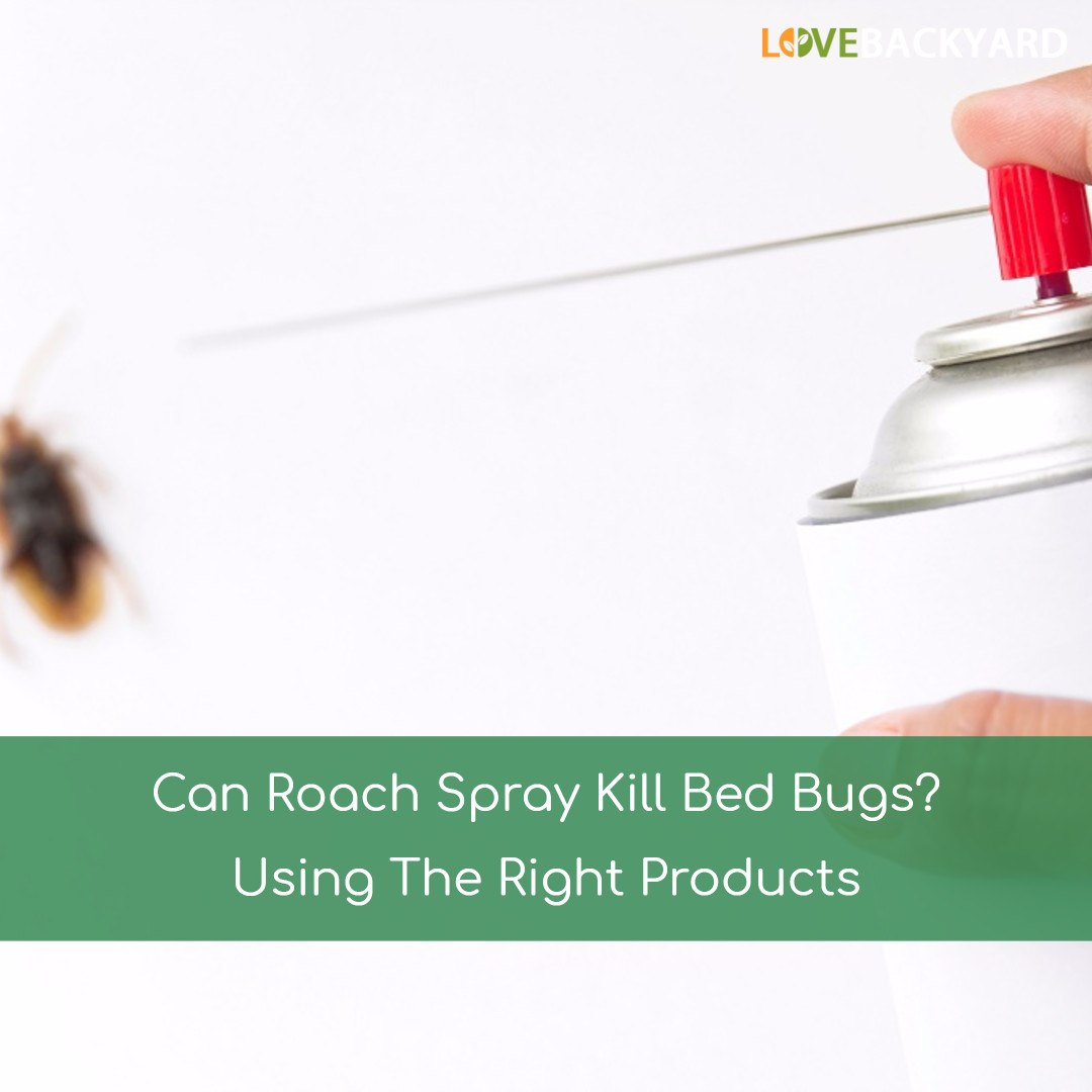 Can I Use Roach Spray For Bed Bugs