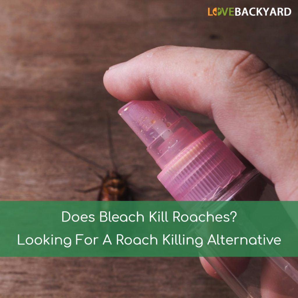 Does Bleach Kill Roaches
