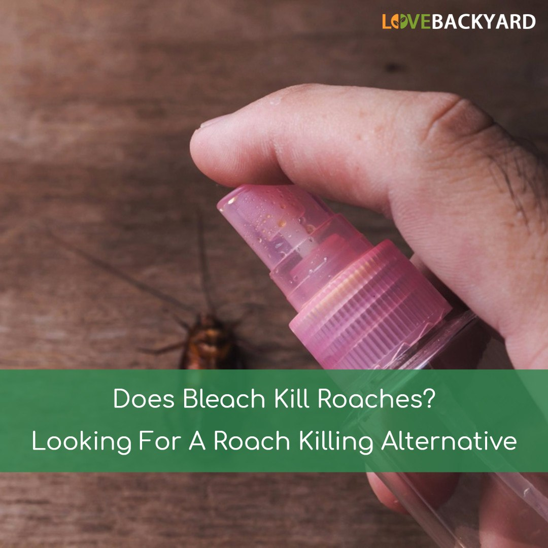 does bleach kill roaches? looking for a roach killing alternative