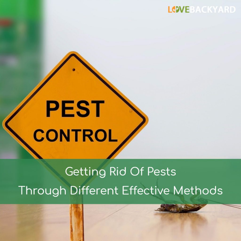 Getting Rid Of Pests Through Different Effective Methods