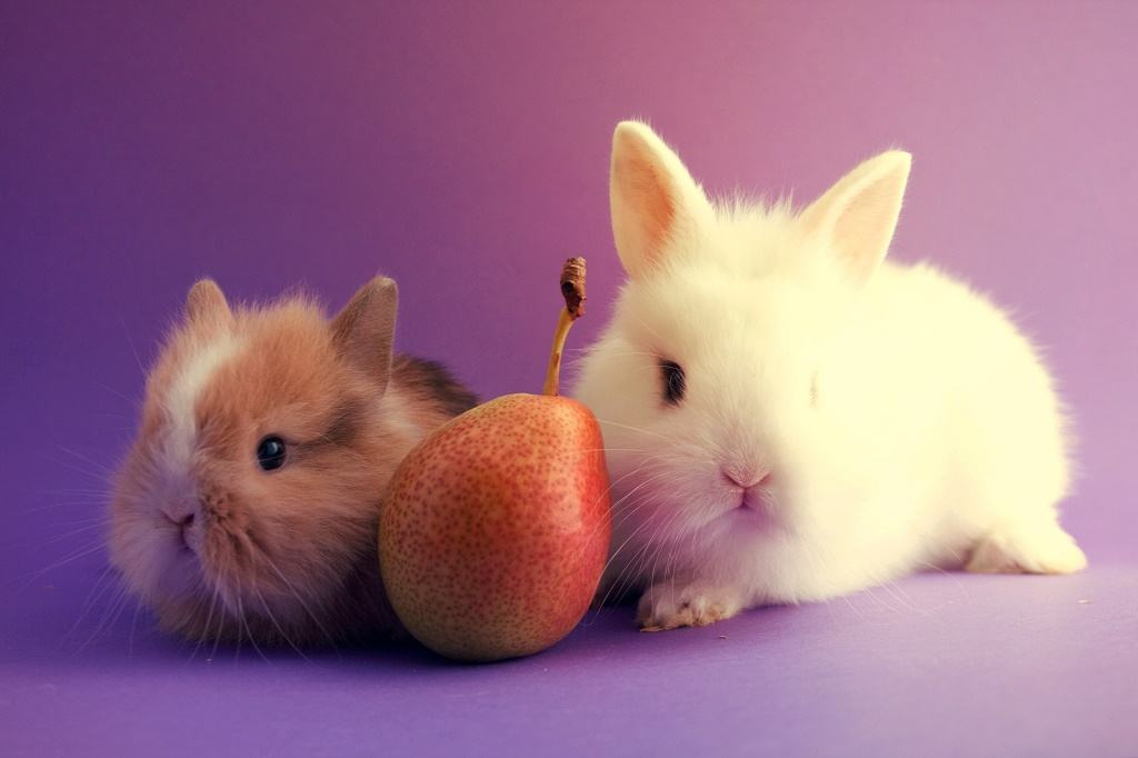 Image result for can rabbits eat pears?