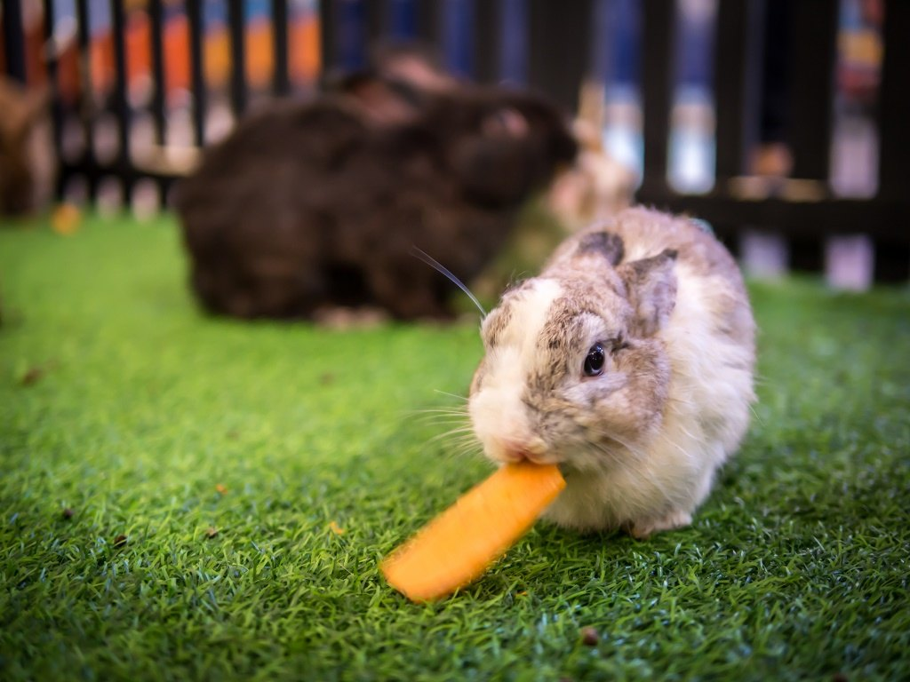 can rabbits eat oranges giving your bunny a dose of vitamin c