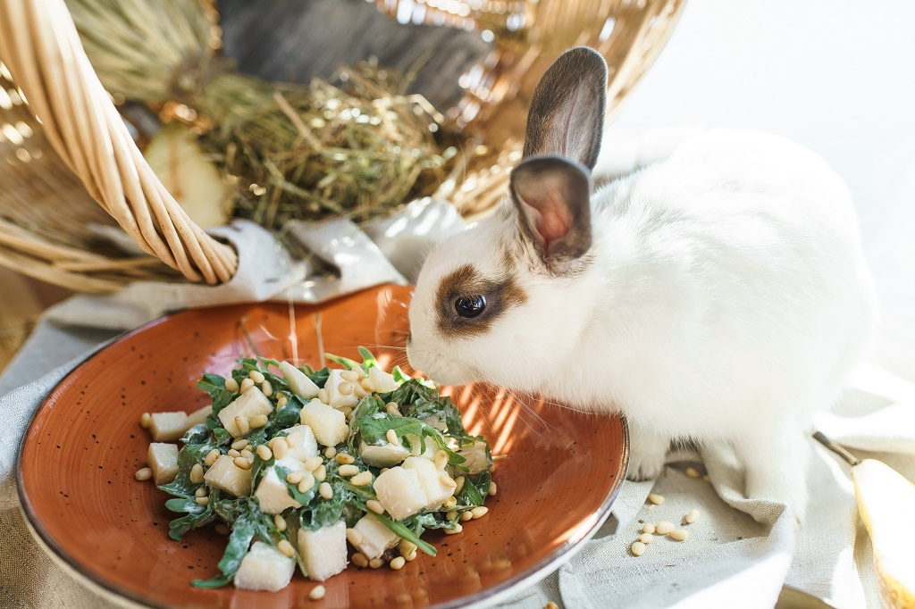 rabbit smelling pear salad
