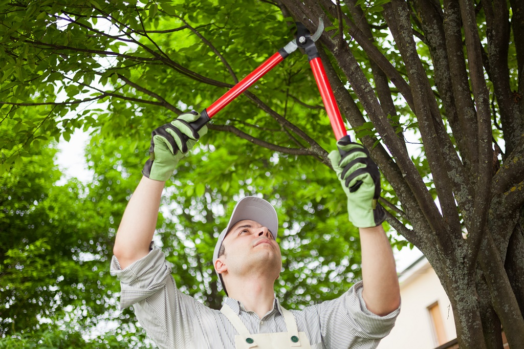 using a large pruning tool