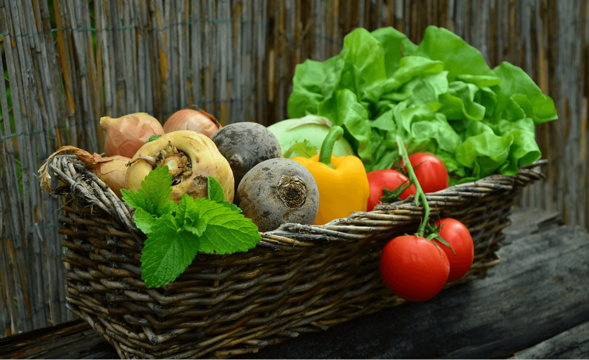 organic gardening- vegetables in the basket