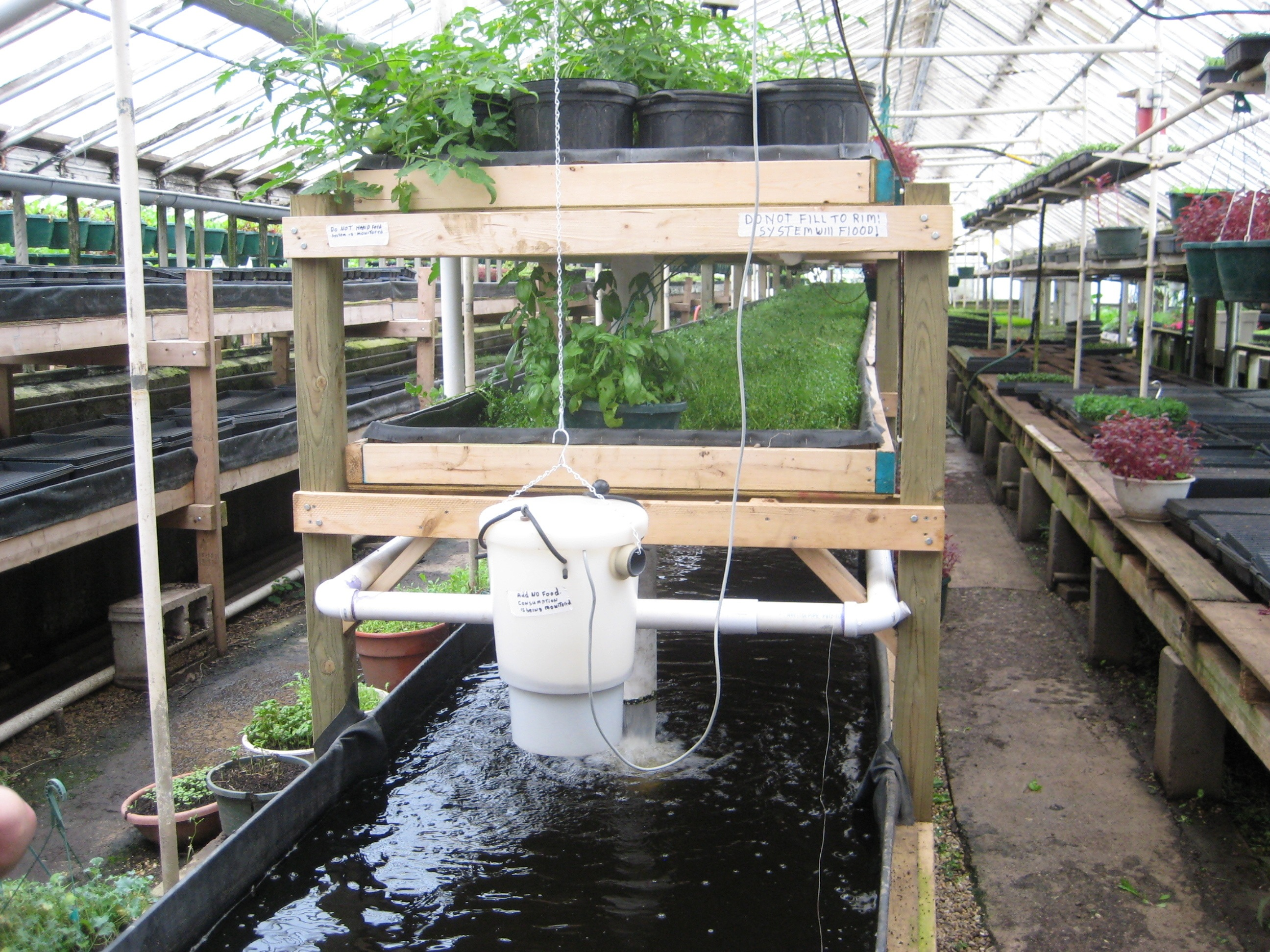 An aquaponic system that involves tilapia or perch up to 10,000 fish in the 5 ft deep tank with watercress and tomatoes as an example of Deep Water Culture
